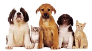 6-10-pets