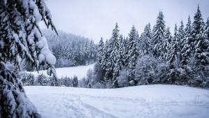 11-25-winter
