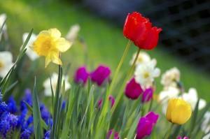 3-1-16-spring